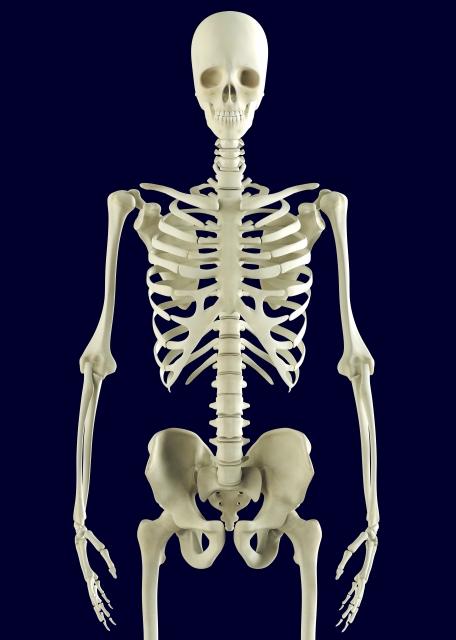 骨格矯正、骨盤、背骨、脊柱